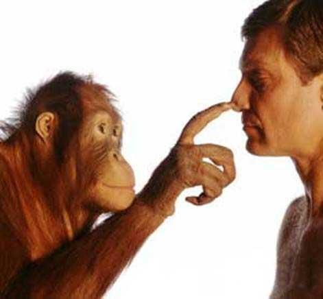 Как человеческие умы связаны друг с другом